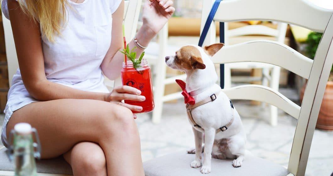Find Pet Friendly Apartments